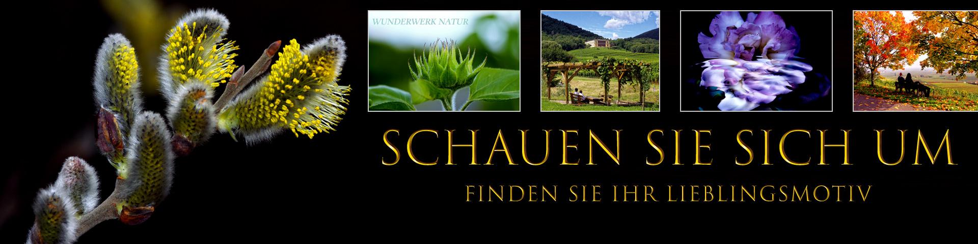 Bildershop von Jürgen Heise