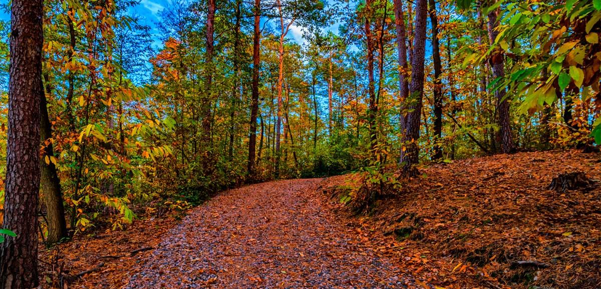 Herbst_006